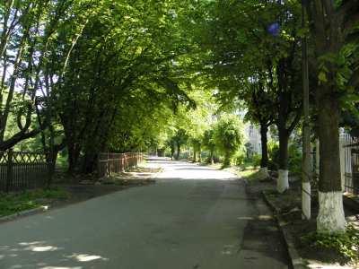 Тихая зеленая улица, очень уютно